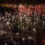 Bruce Munro's fiber optic light Installations at Longwood Gardens